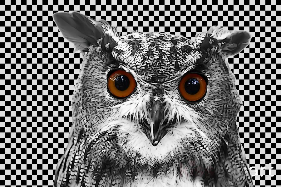 owl bird of prey bird eastern screech owl western screech owl