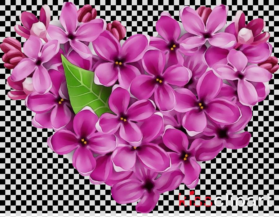 flower petal lilac pink purple