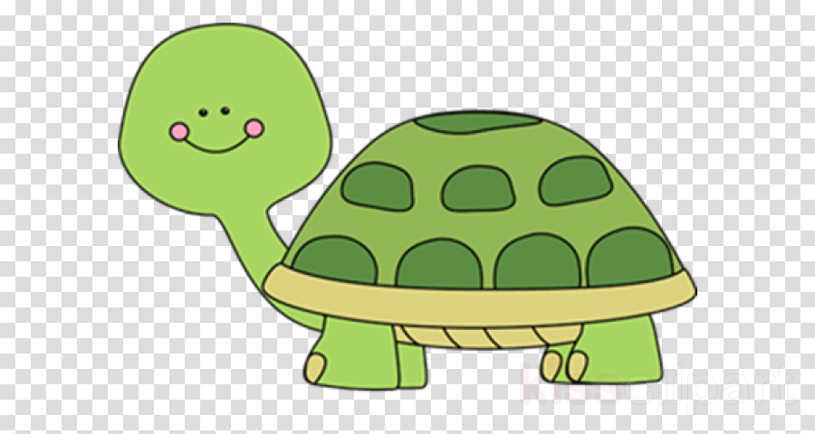 tortoise green turtle cartoon reptile