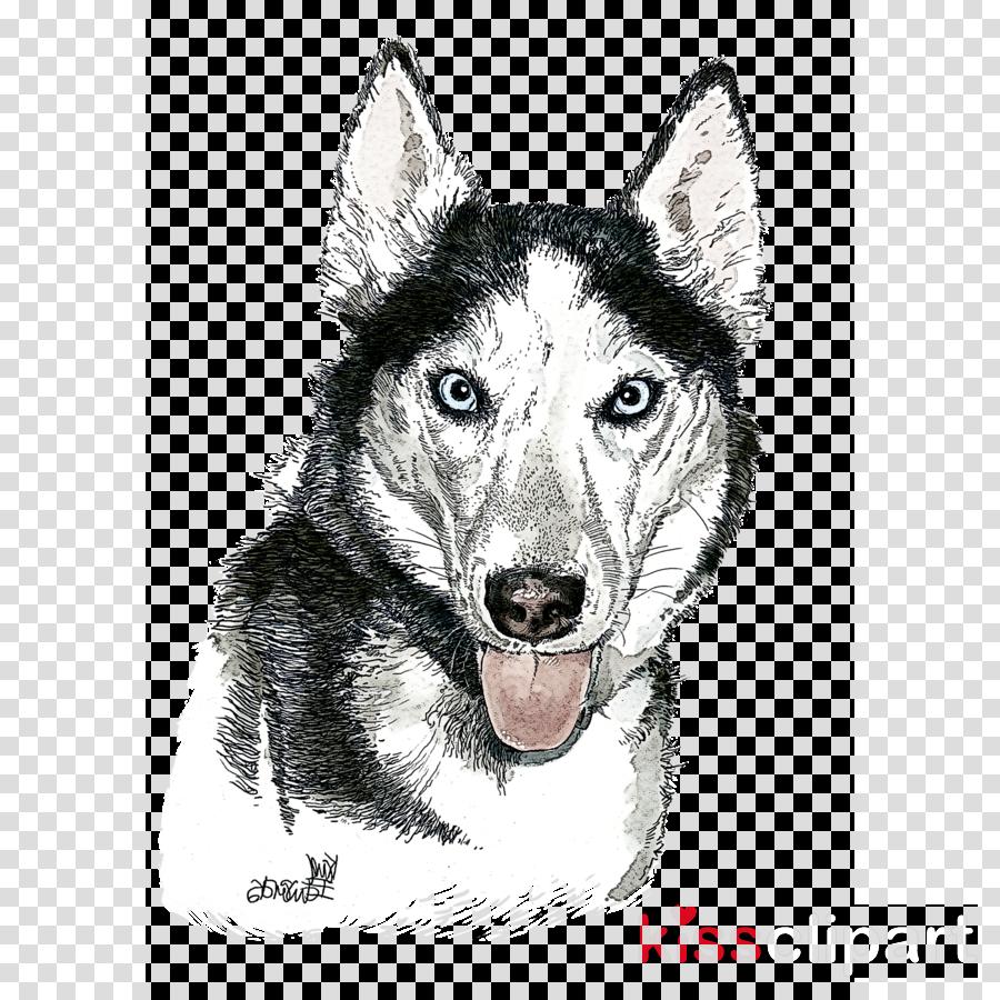 dog drawing northern inuit dog native american indian dog siberian husky