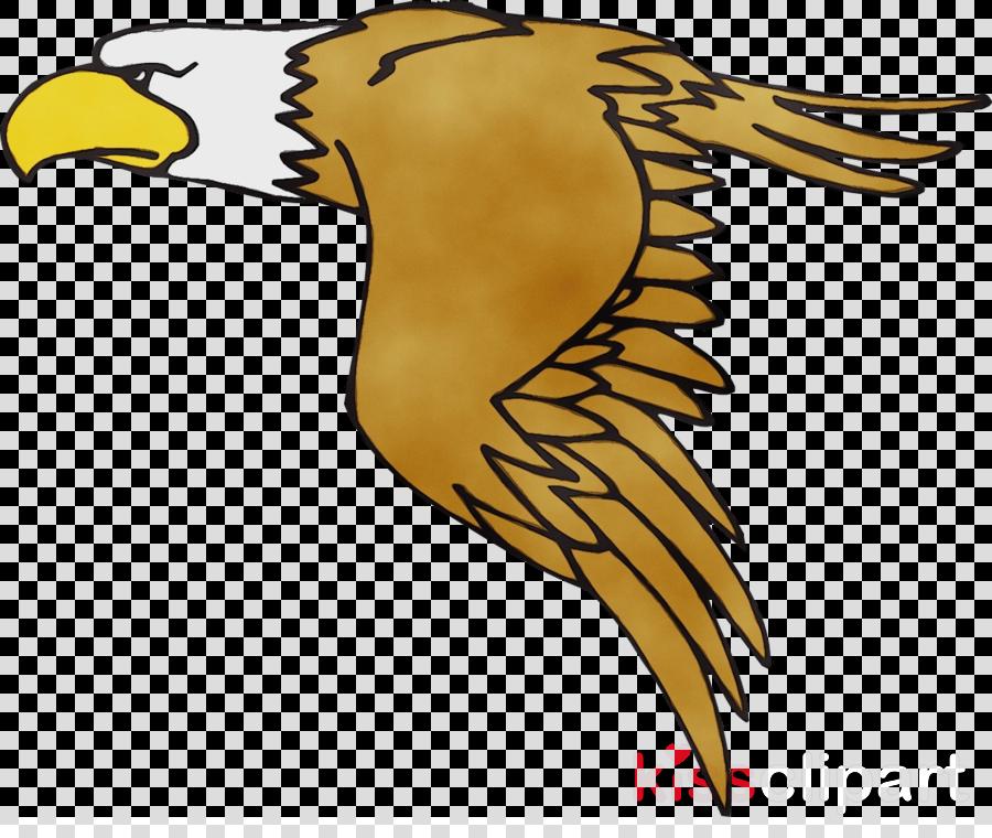 bald eagle bird eagle peregrine falcon beak