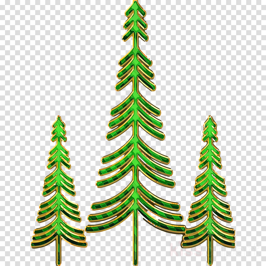 yellow fir shortleaf black spruce colorado spruce oregon pine canadian fir