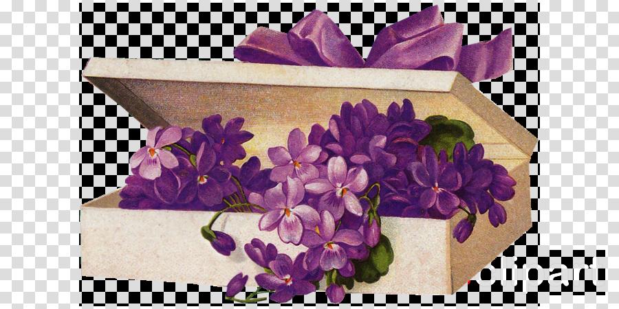violet purple flower lilac plant