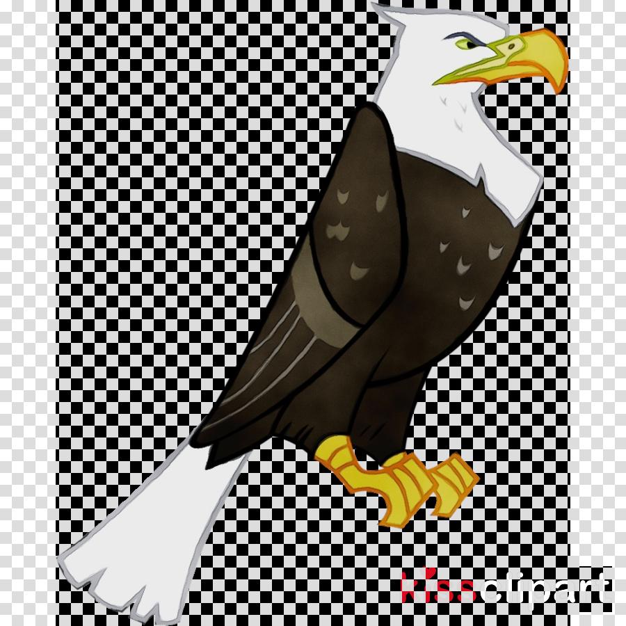 bird bald eagle eagle bird of prey accipitridae