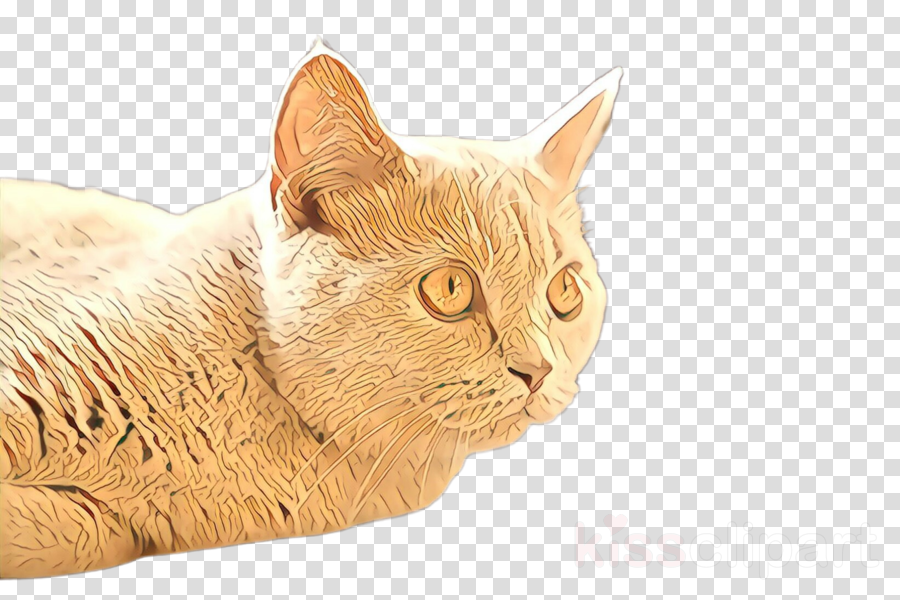 cat small to medium-sized cats whiskers european shorthair american bobtail