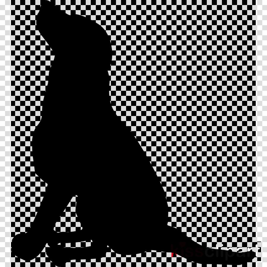 tail silhouette california sea lion black-and-white cat
