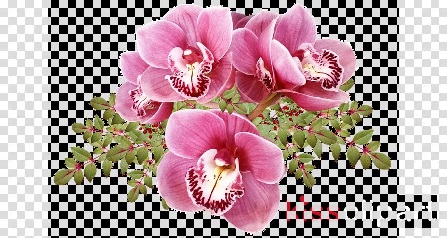 flower pink plant petal cut flowers