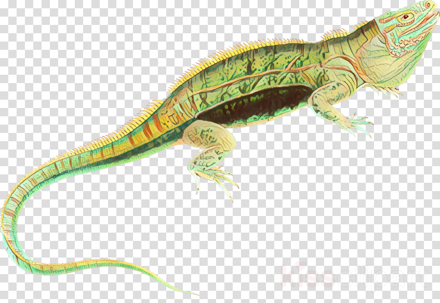reptile lizard scaled reptile iguania wall lizard
