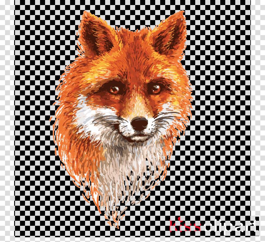red fox fox swift fox wildlife dhole