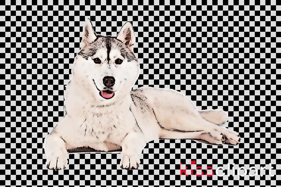 dog siberian husky alaskan malamute wolfdog sled dog