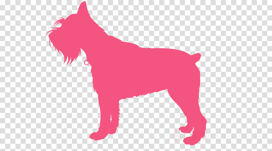 dog pink miniature schnauzer lakeland terrier tail