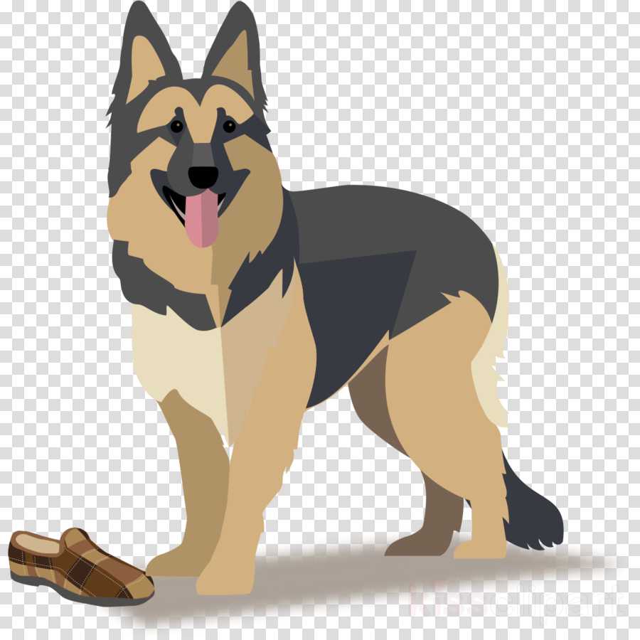 dog german shepherd dog working dog king shepherd