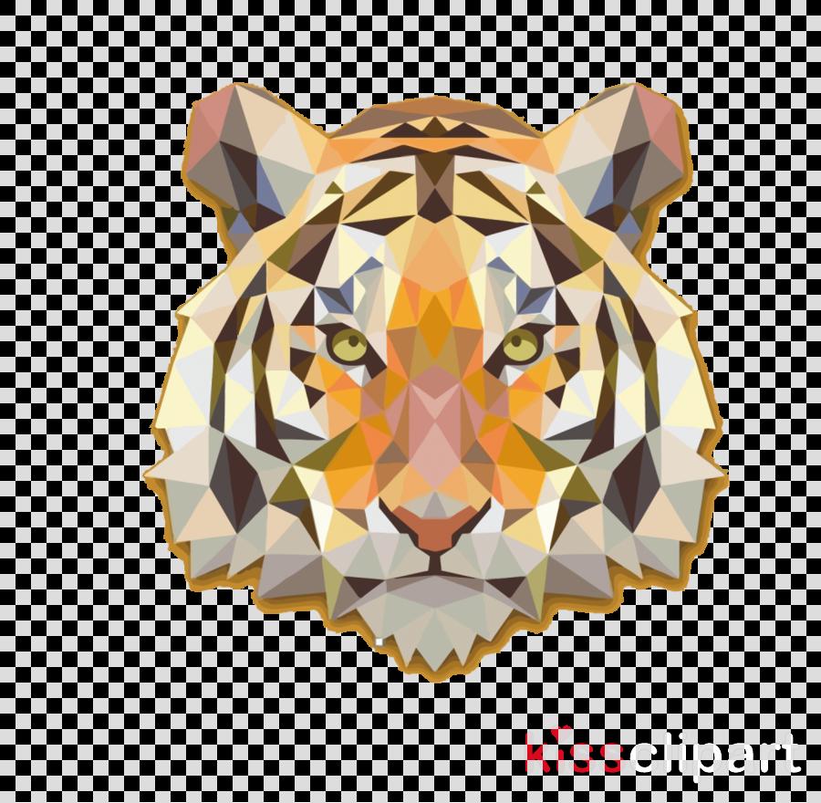 bengal tiger tiger wildlife snout siberian tiger