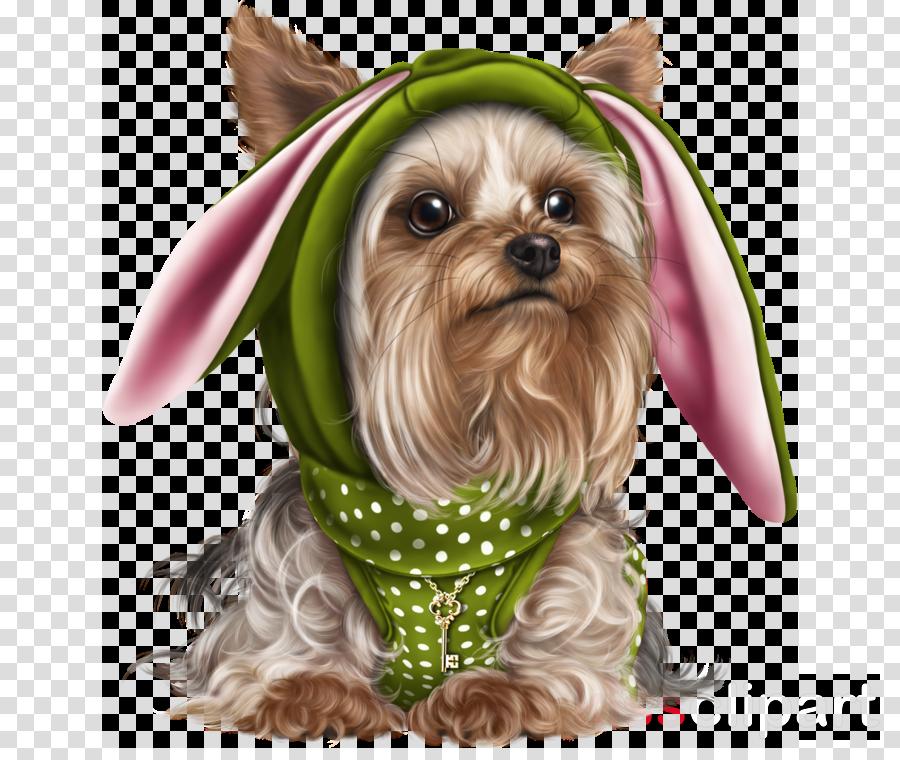 dog yorkshire terrier shih tzu terrier puppy