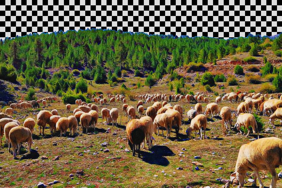 herd grazing pasture herding grassland