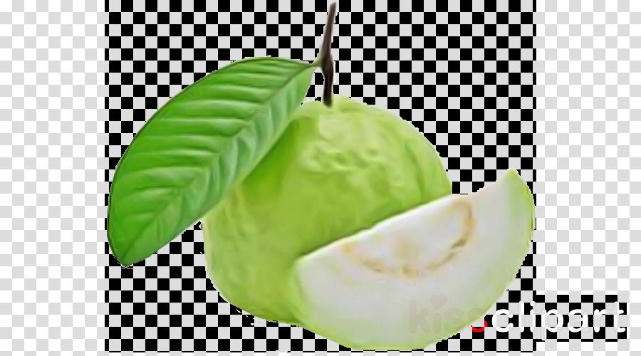 leaf plant fruit tree food