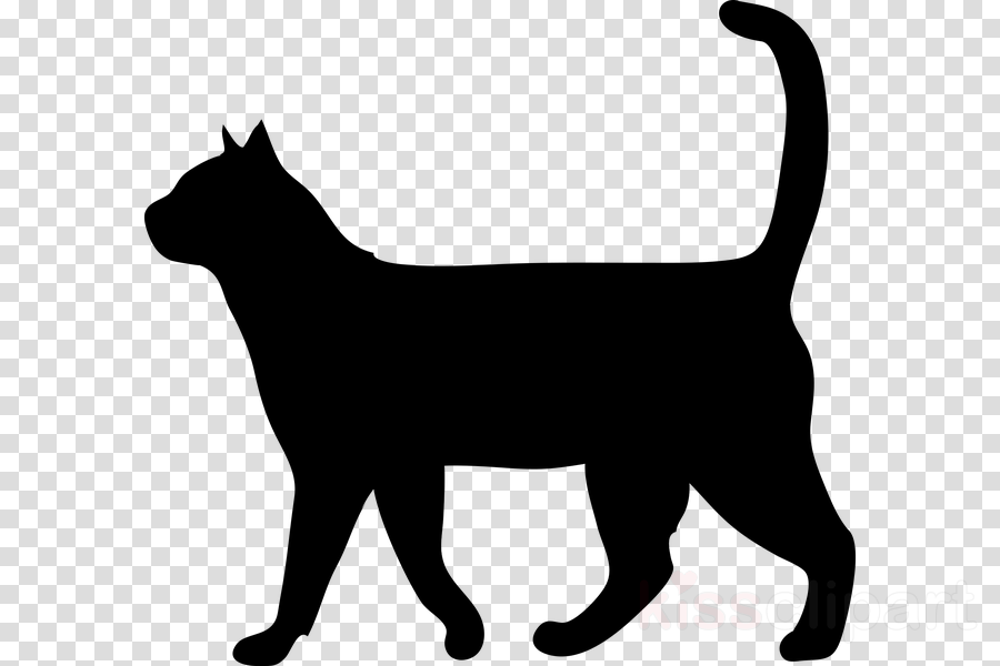cat small to medium-sized cats black cat tail silhouette