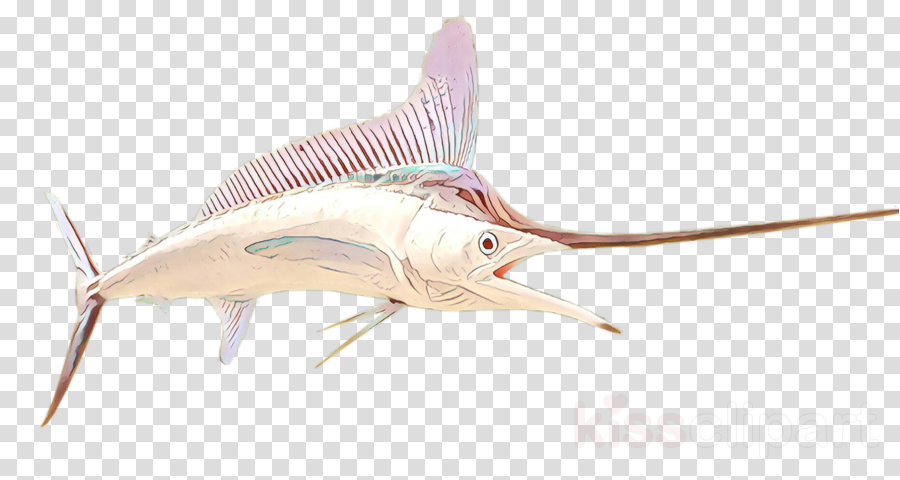 fish atlantic blue marlin fish marlin sailfish