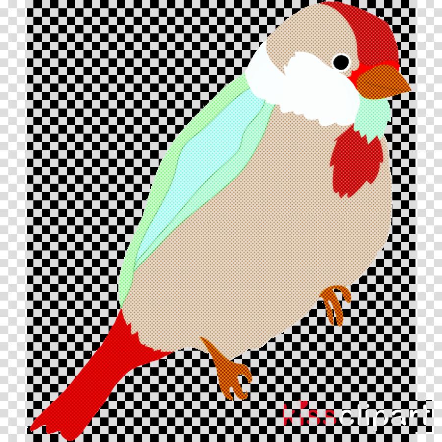 bird beak finch european robin perching bird