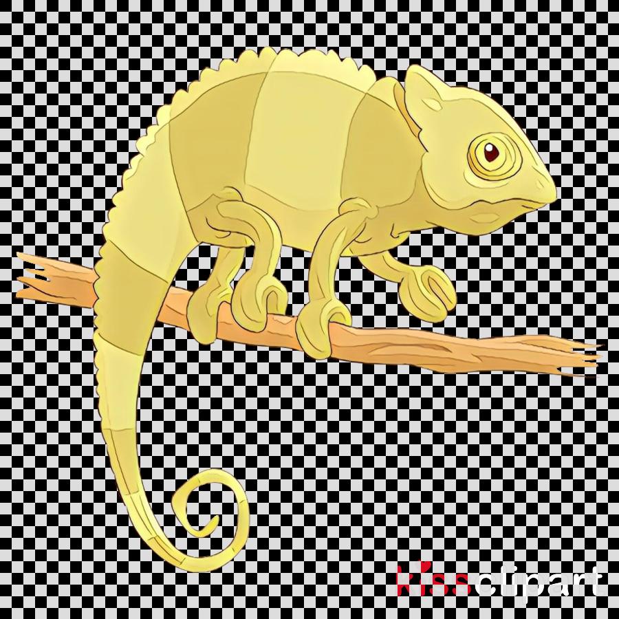 chameleon lizard iguania common chameleon reptile