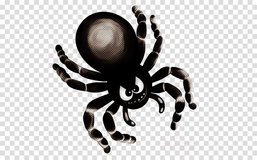 spider tarantula arachnid octopus widow spider