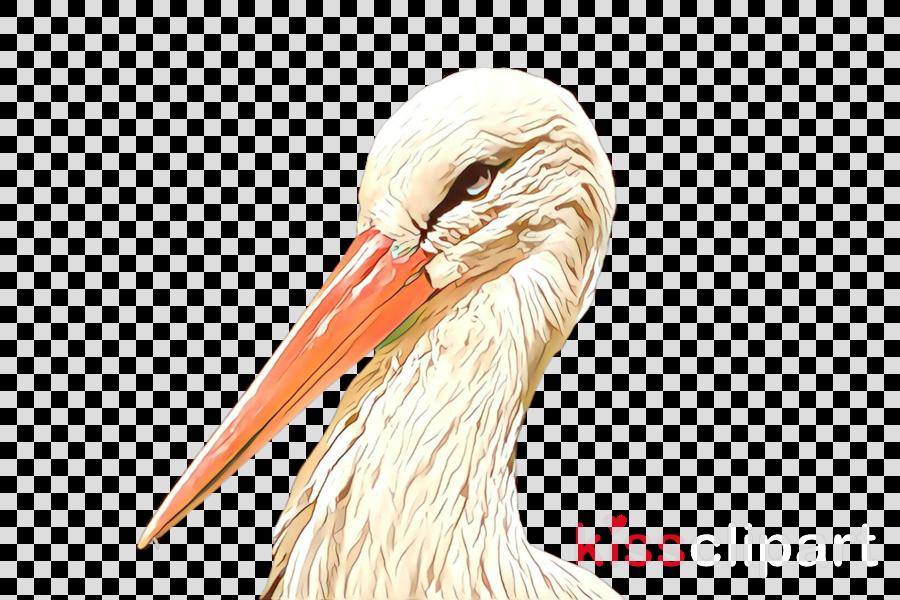 bird beak stork pelican white stork