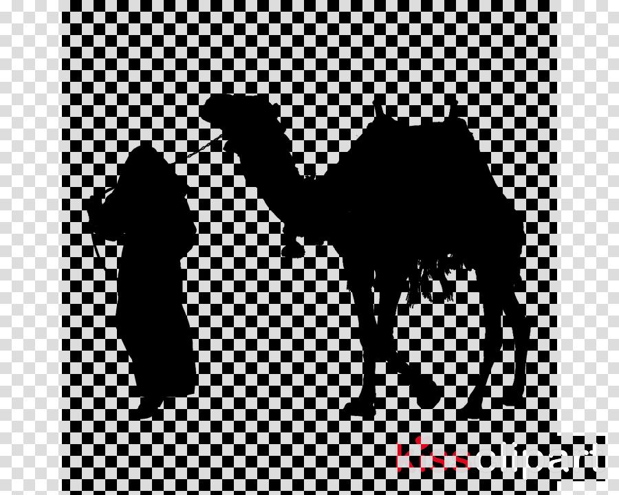 camel camelid arabian camel bactrian camel livestock