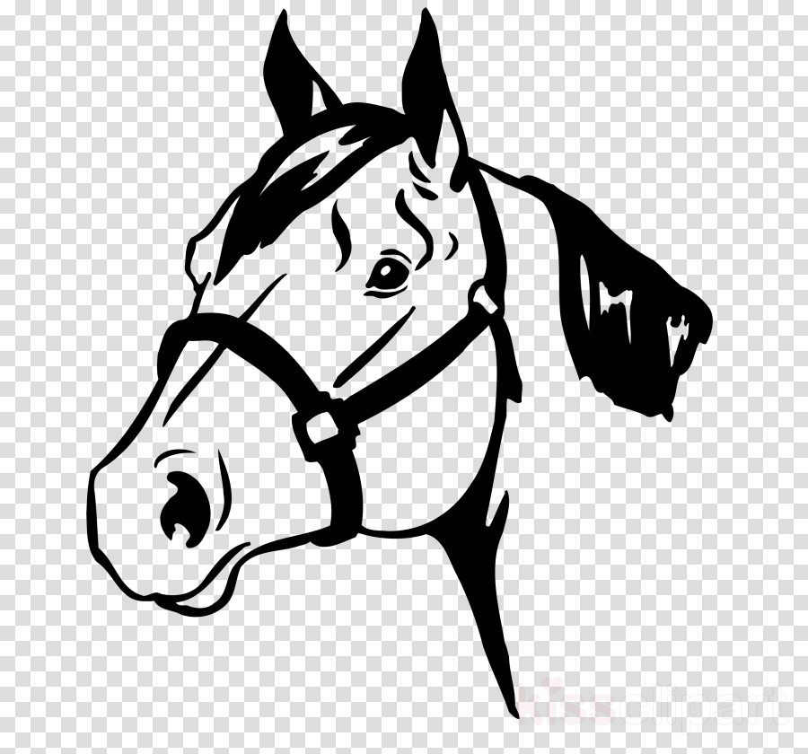 white bridle line art black-and-white head