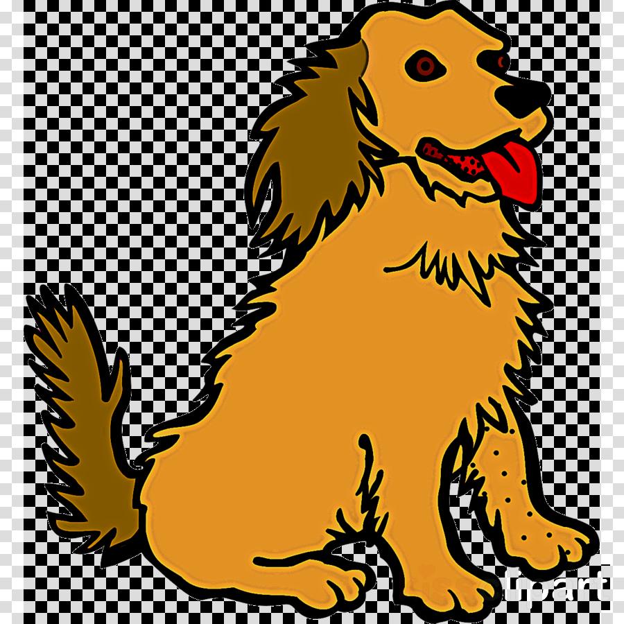dog sporting group spaniel cocker spaniel boykin spaniel
