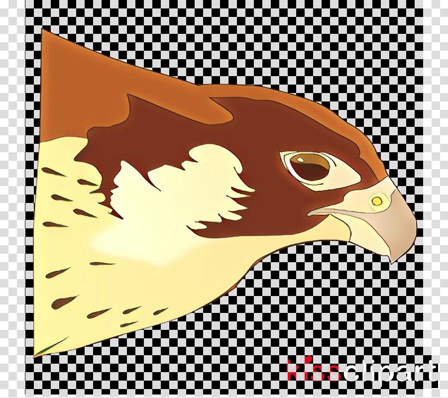 bird eagle golden eagle hawk peregrine falcon