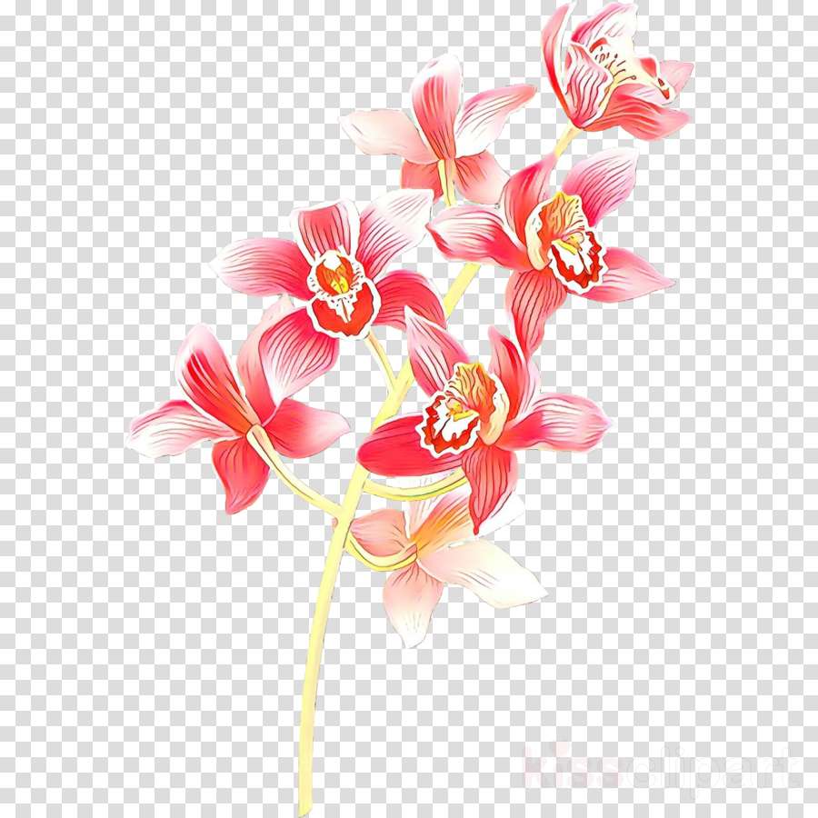 pink flower cut flowers plant petal