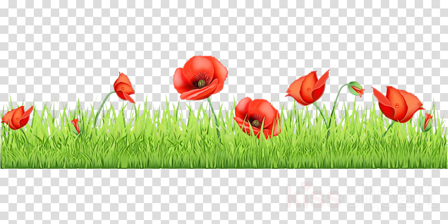 coquelicot red poppy natural landscape natural environment