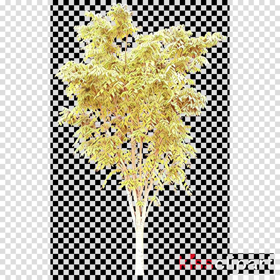 tree plant flower woody plant twig