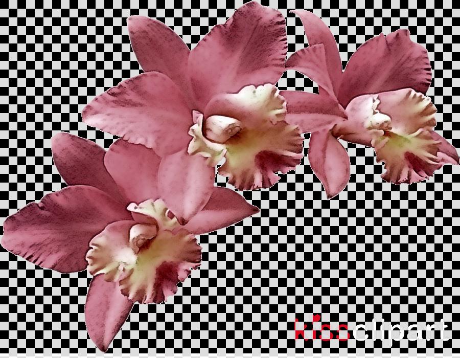 flower pink petal plant cut flowers