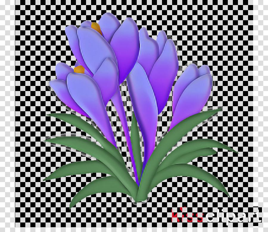 flower plant violet purple petal