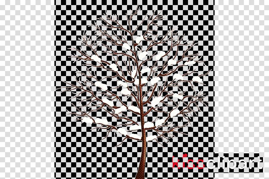 white pine tree leaf branch twig
