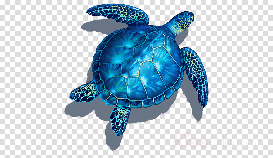 sea turtle olive ridley sea turtle hawksbill sea turtle blue turtle