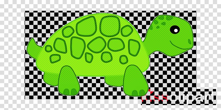 green tortoise turtle sea turtle reptile