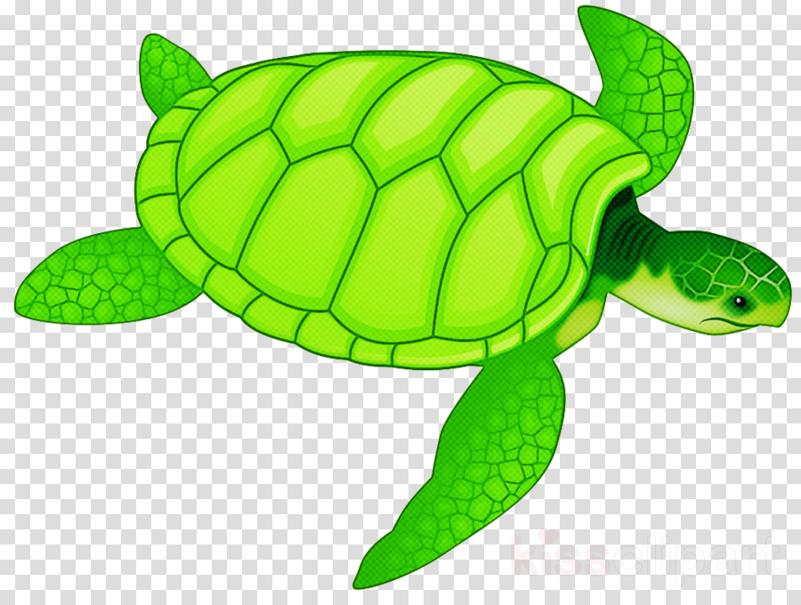 sea turtle green green sea turtle turtle tortoise