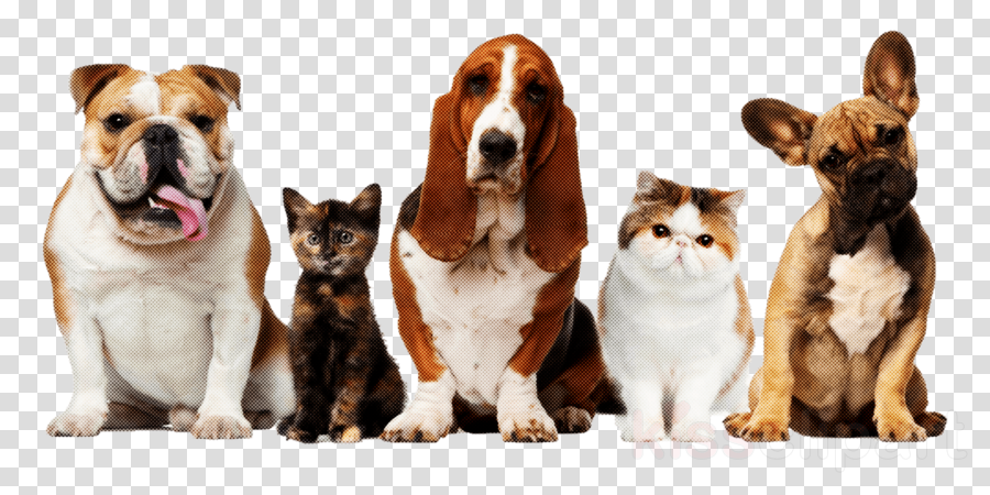 dog companion dog ancient dog breeds cat basset hound