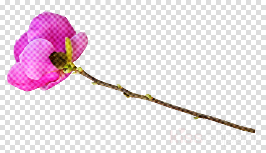 flower plant petal pink branch