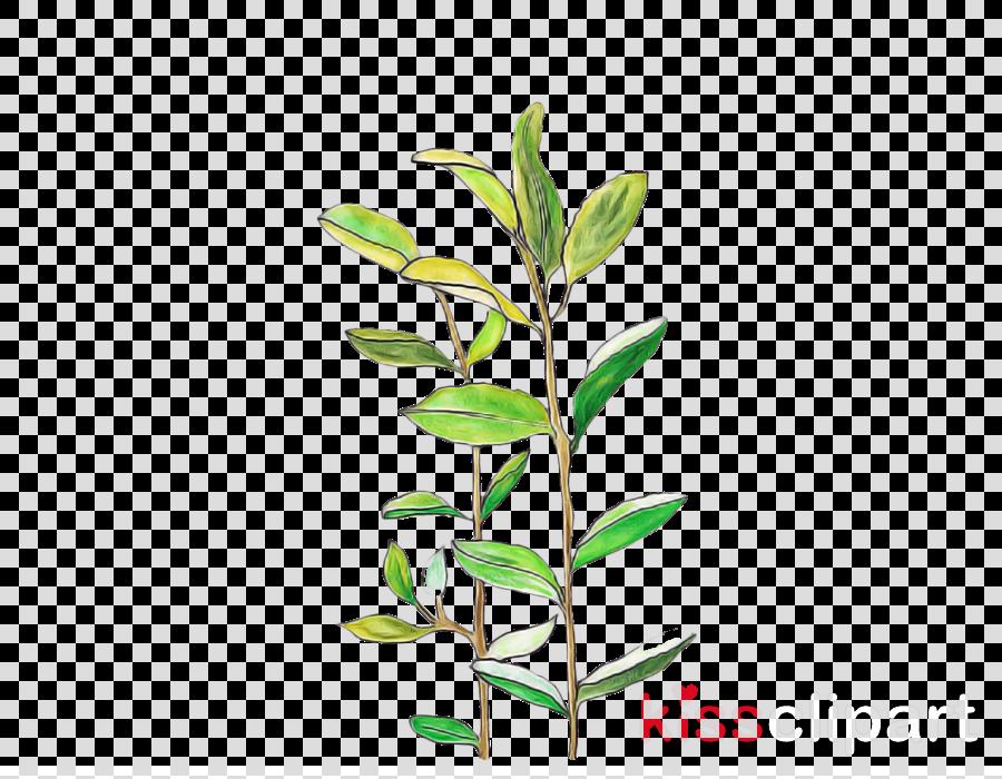 flower plant leaf branch plant stem