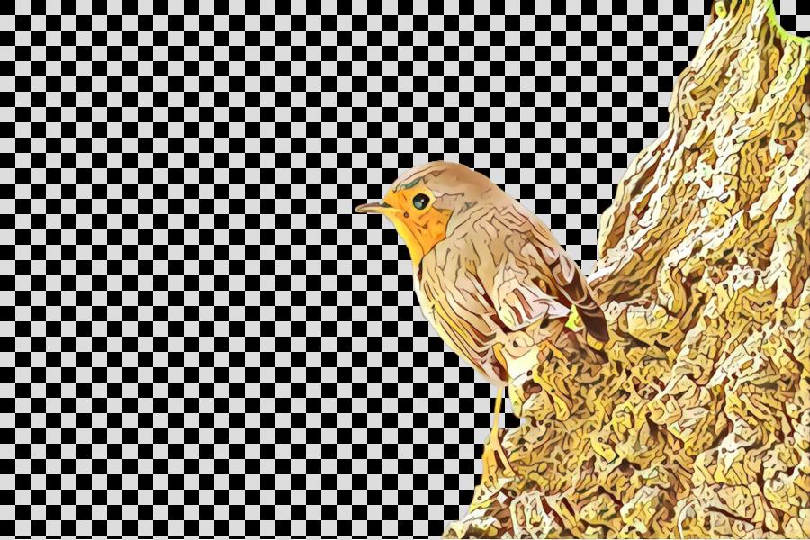 bird finch atlantic canary beak songbird