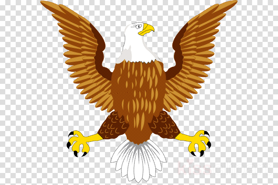 bird bald eagle golden eagle bird of prey eagle