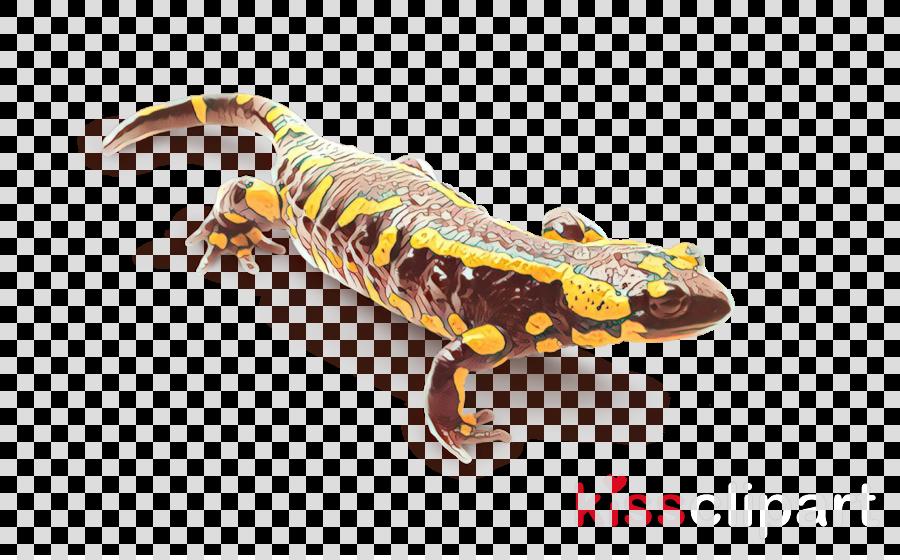 true salamanders and newts salamandra lizard salamander reptile