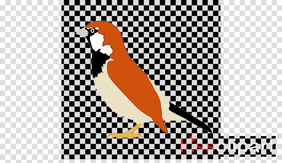bird beak finch sparrow perching bird