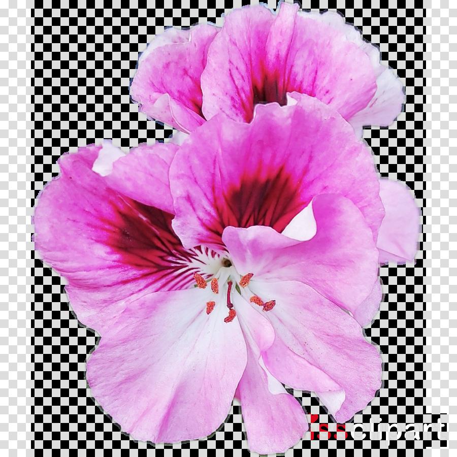 flower petal pink plant purple