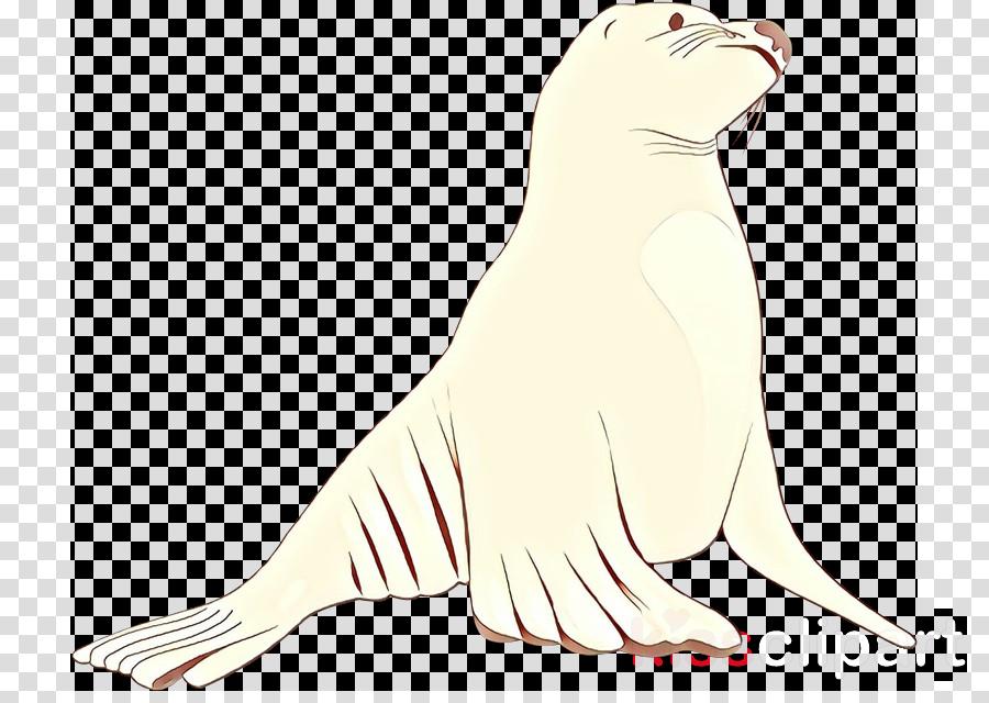 california sea lion seal fur seal earless seal tail