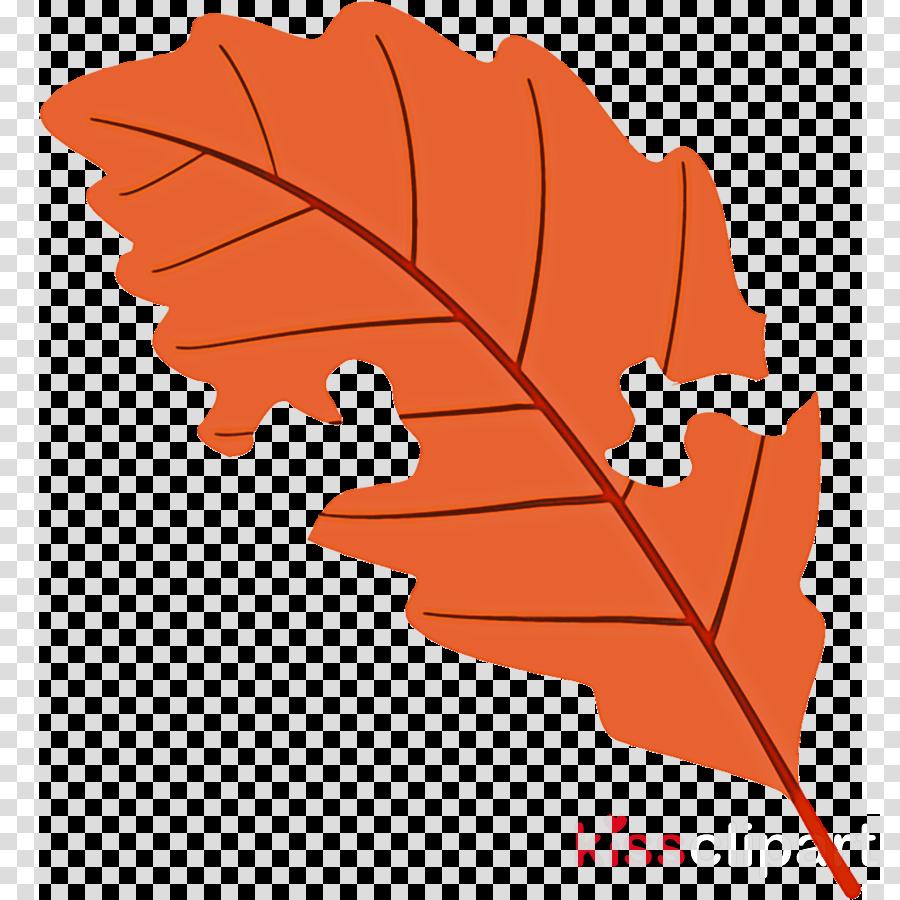worm-eaten leaf fallen leaf dead leaf