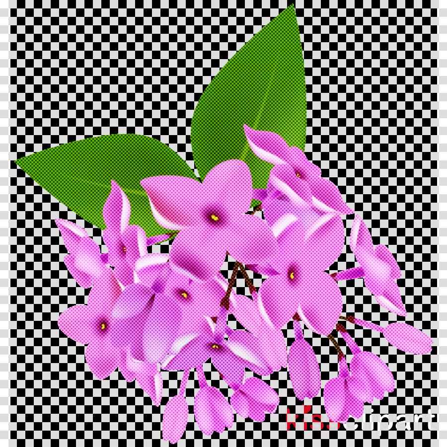 flower pink plant lilac petal